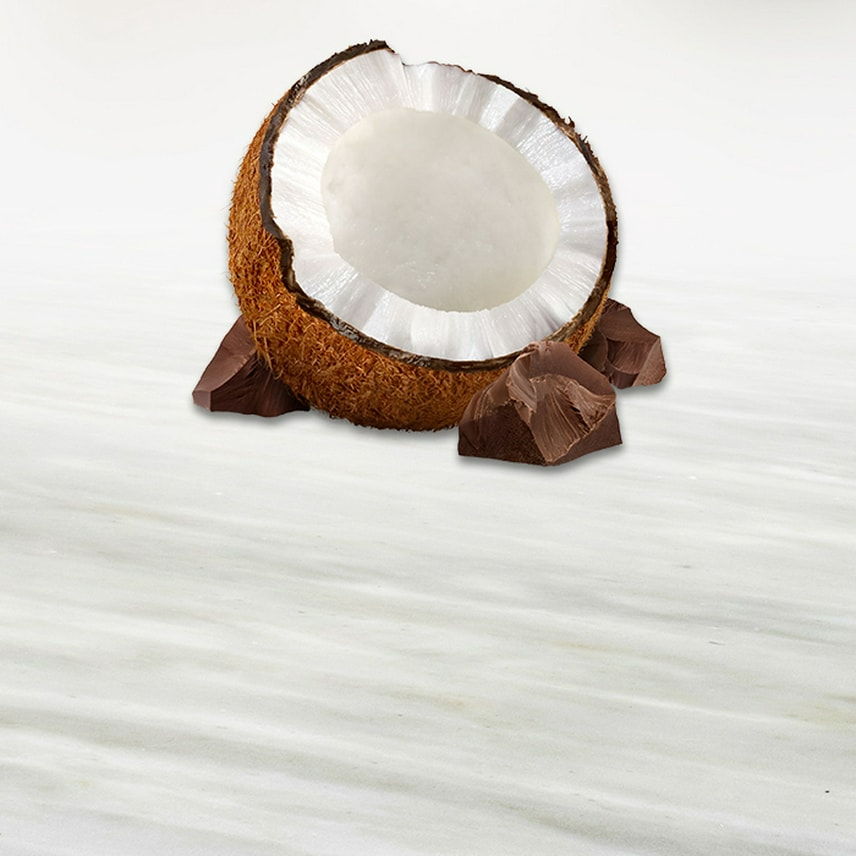 Coconut Iconic Jingle